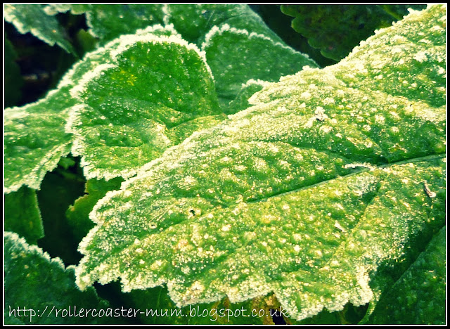frost sparkle on parsnips
