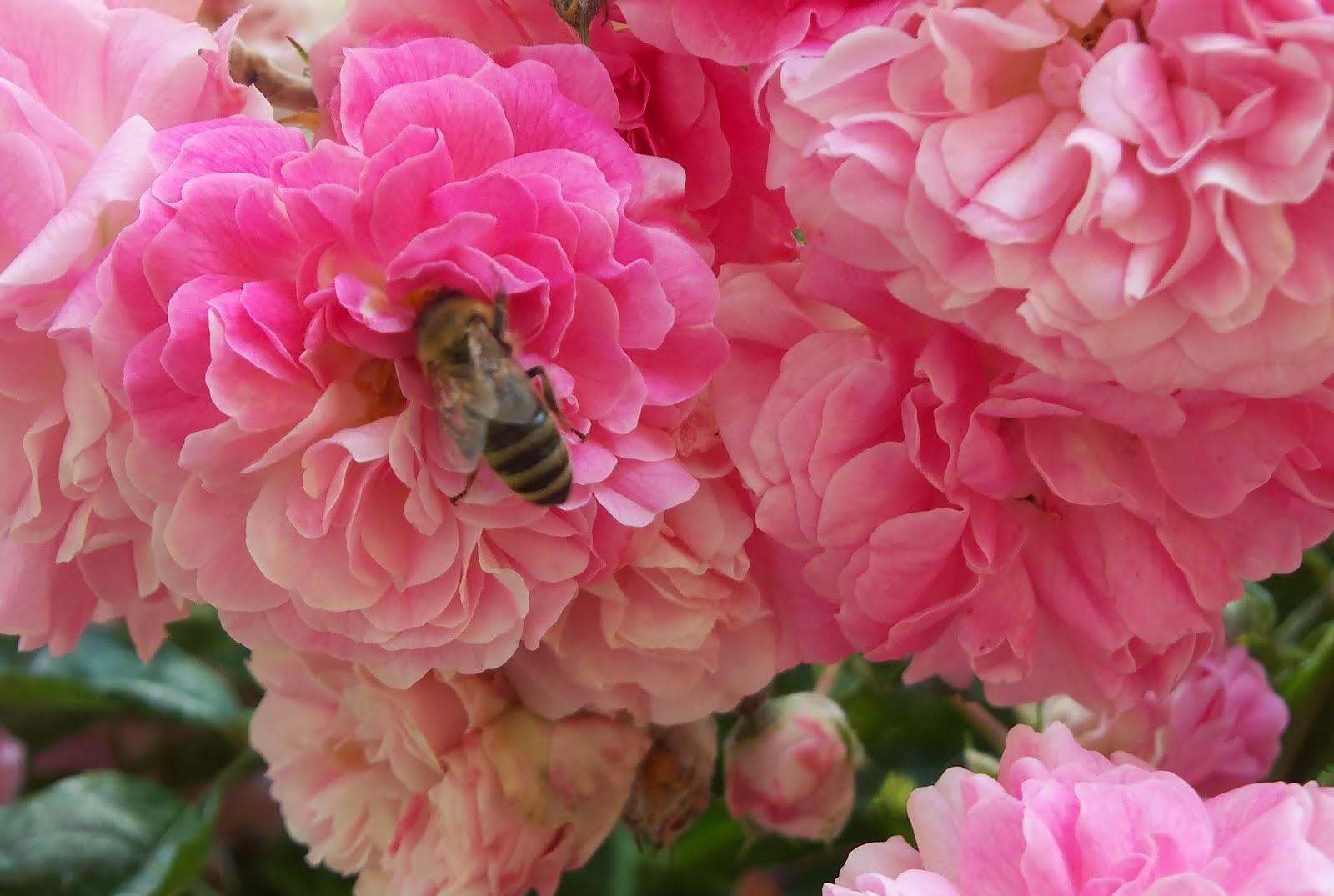 Miele dolce miele