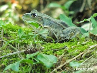 mare aux grenouilles