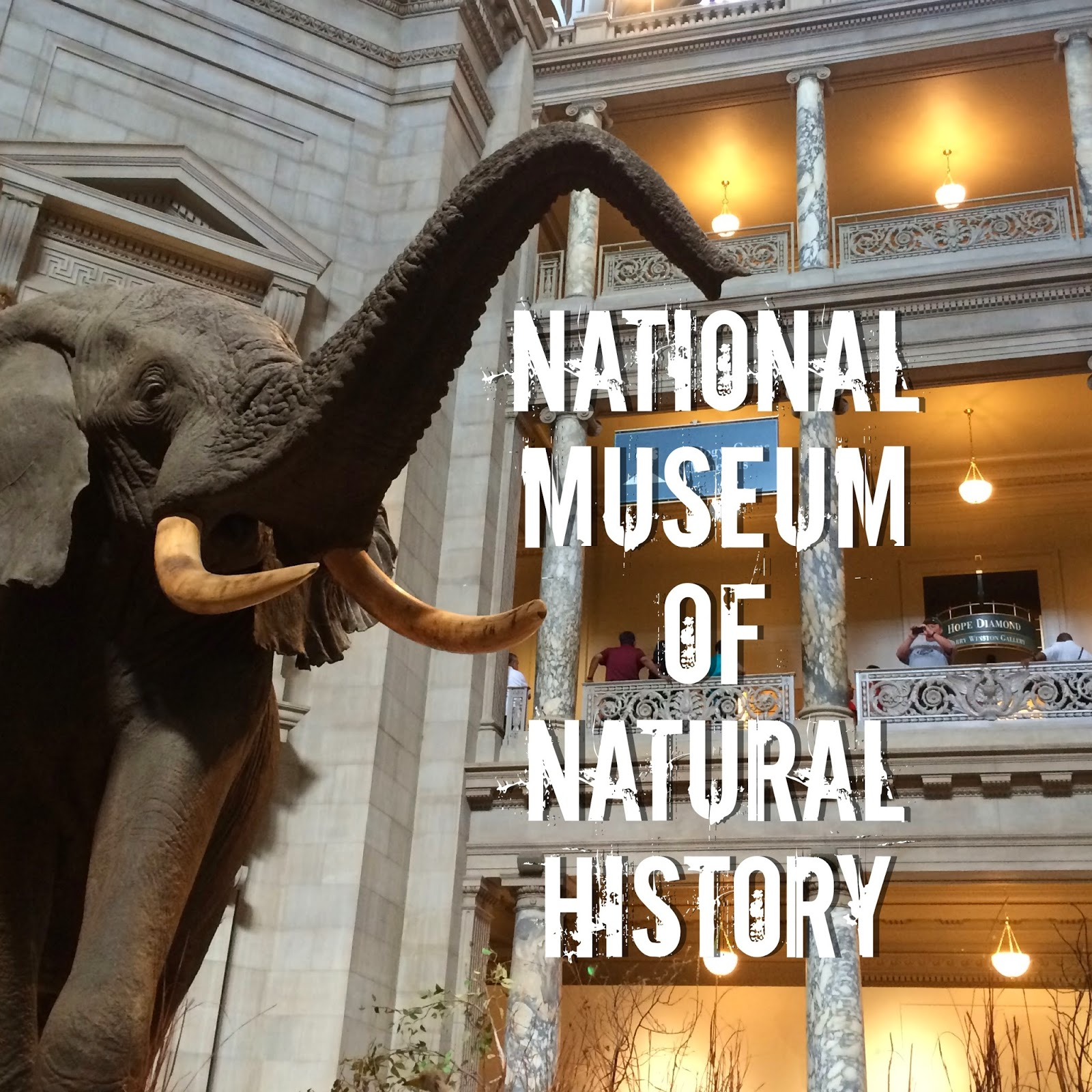 http://melthemidnightbaker.blogspot.com/2014/06/natural-history-museum.html
