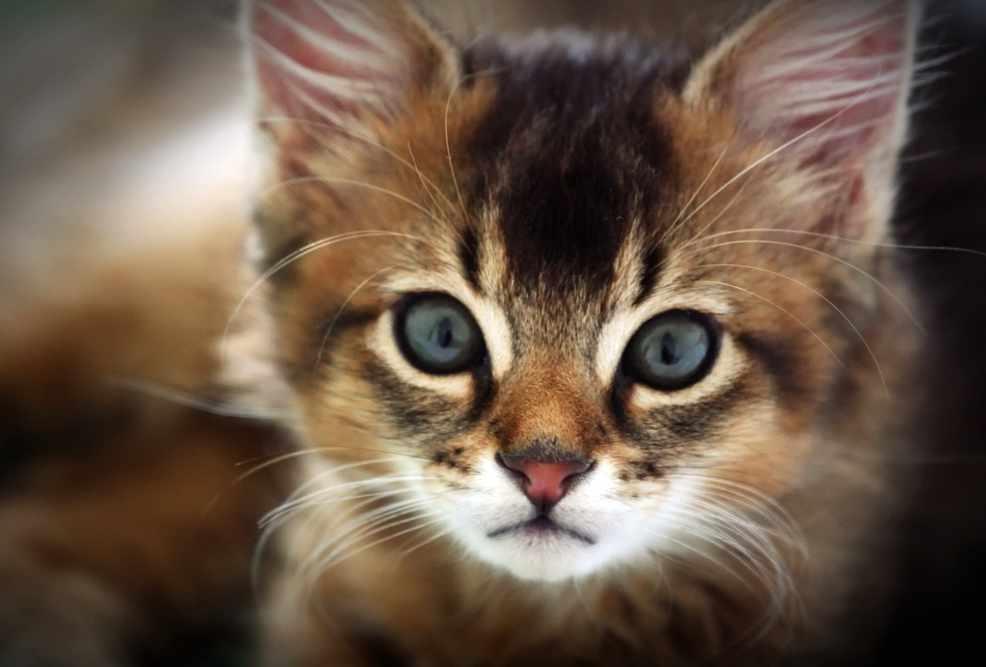 Фикбук нет кот и котенок