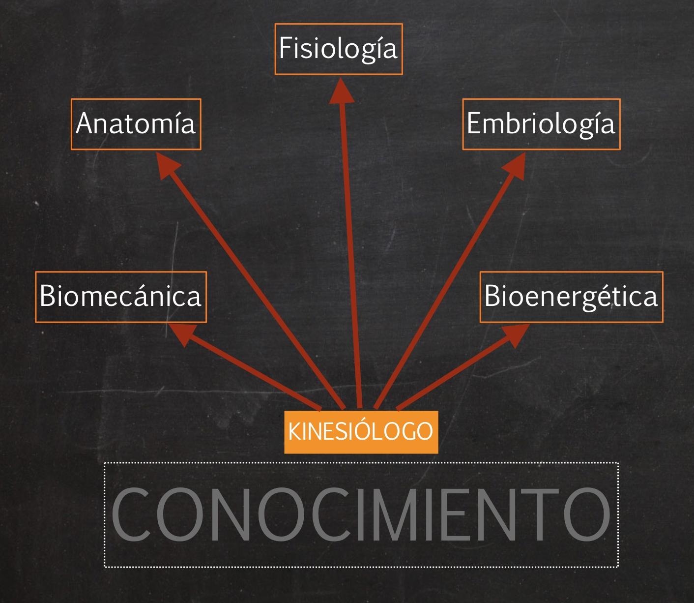 CENTRO DE NATUROLOGIA HOLISTICA: Kinesiología Holística manual