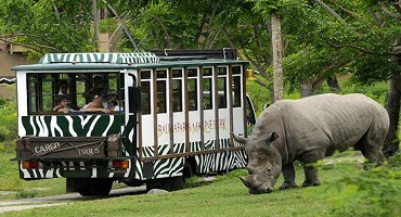Bali Safari Park and Snorkeling Tour