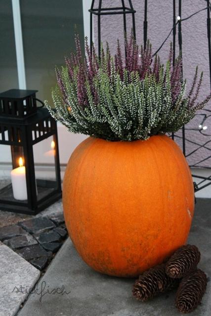 Herbst deko k rbis als blumentopf mit heide kata for Deko blumentopf