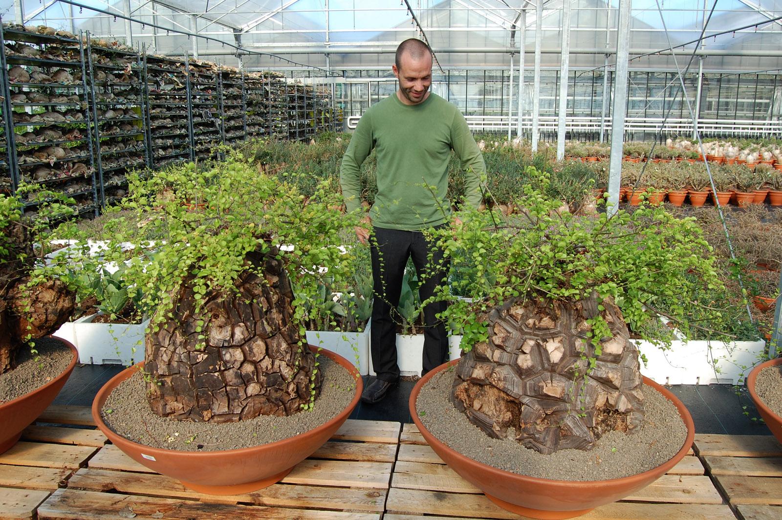 Jardin de aloes cactus ariane b lgica for Vivero de cactus