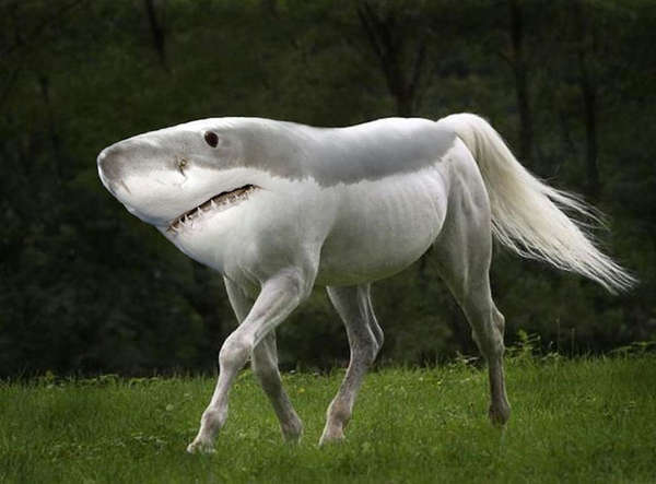 These morphed creatures are some funny work by gyyp his hilarious