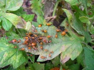 Como hacer insecticida casero natural aprender hacer for Casa jardin insecticida