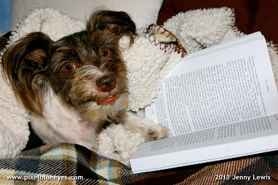 Photo of Pixel reading a book