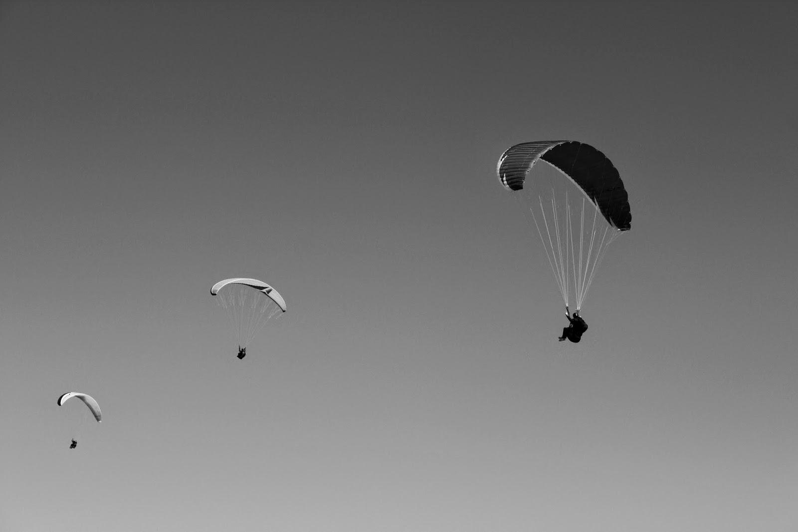 Parapentes en noir et blanc