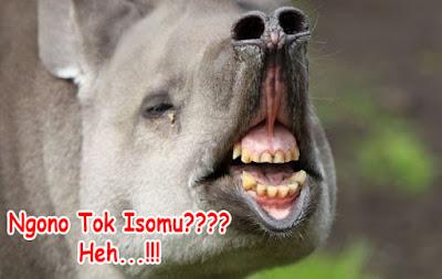 gambar hewan lucu tulisane