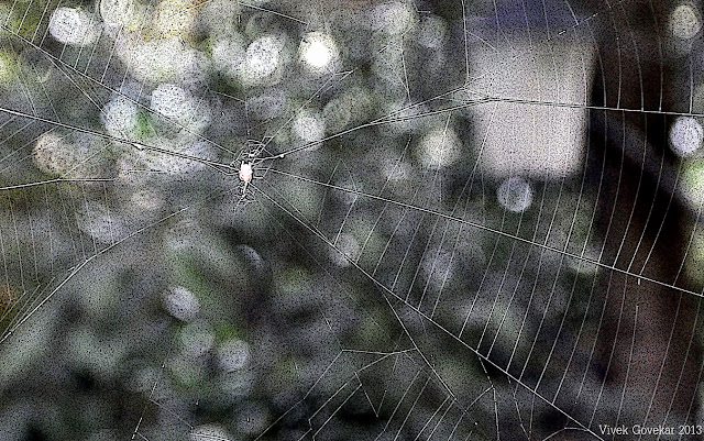 Laws are spider webs through which the big flies pass and the little ones get caught. Honore de Balzac