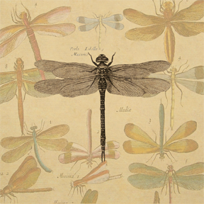 Collage Dragonfly Vintage