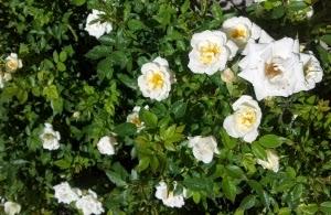 Five Tips to Make Spring Gardening Easy
