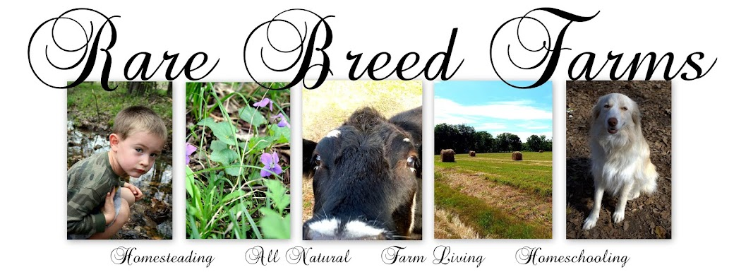 Rare Breed Farms