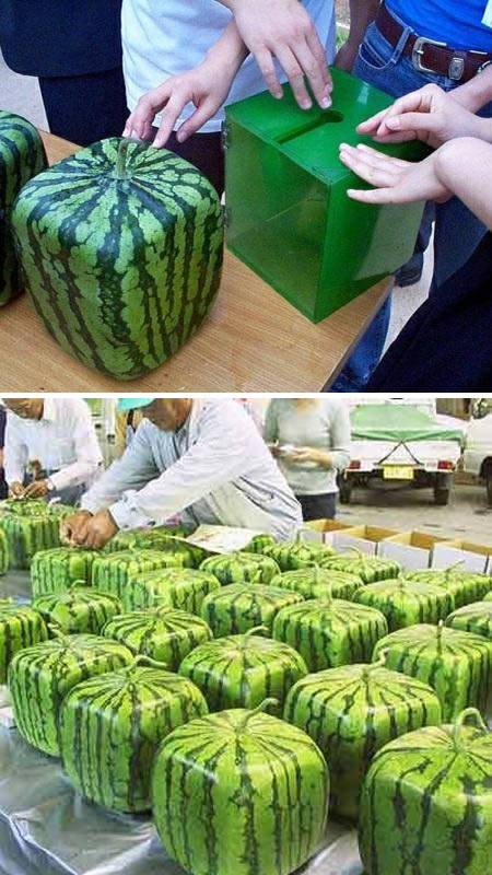 This is My Happy Place: Square WaterMelon - Thinking ...