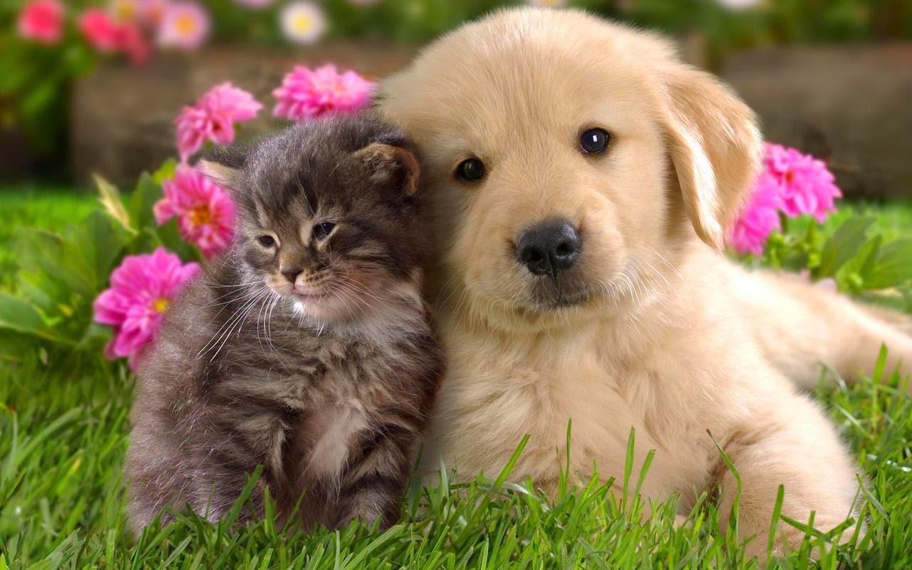 Kittens And Flowers Wallpaper Kitten Puppy Field Flower