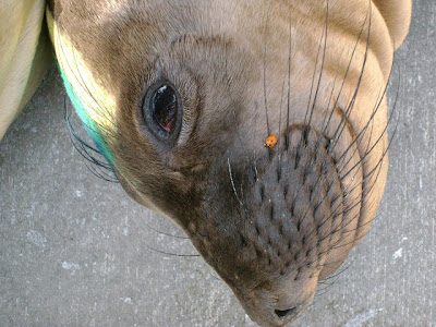 seal+and+ladybug - Volunteering - Kindness Matters