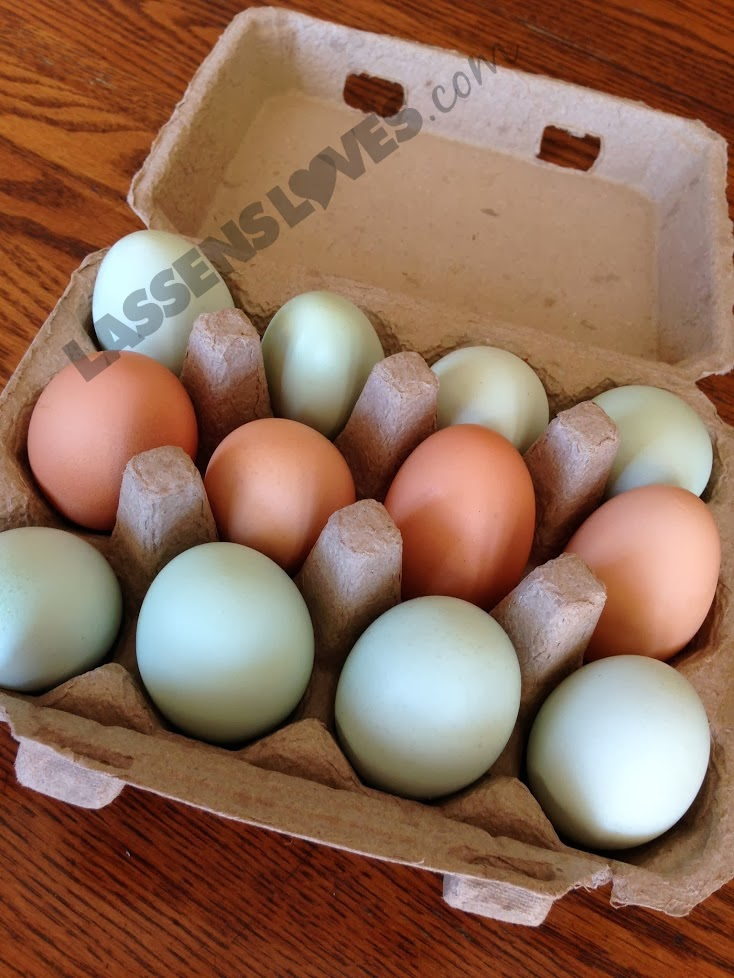 Highwood+farms+eggs, highwood+Eggs