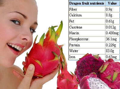 tanaman untuk obat kuat pria