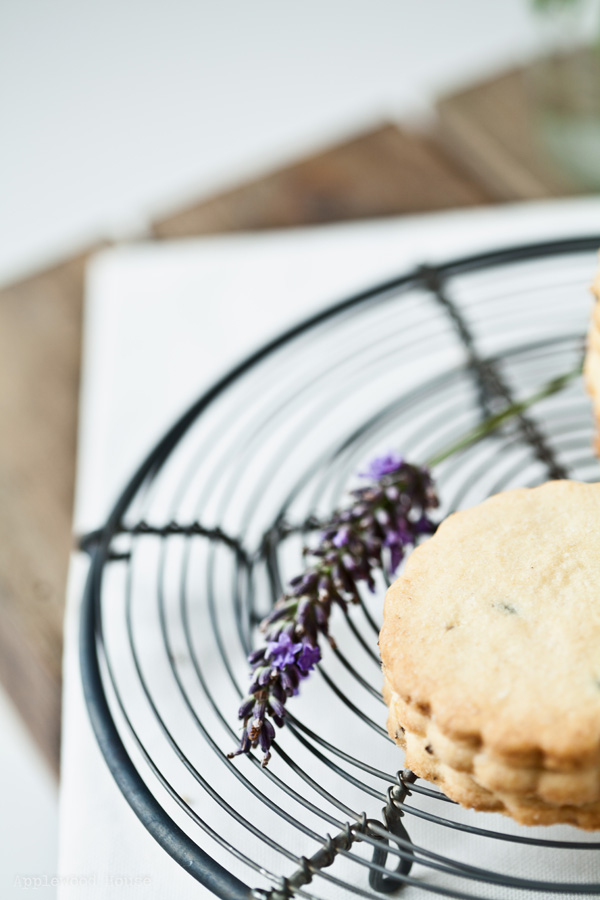 Lavendel Keks Sommer Gebäck Post aus meiner Küche