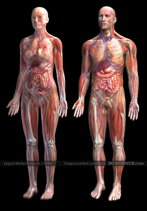 Anatomy body picture