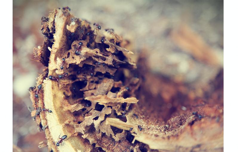 colonie de fourmis