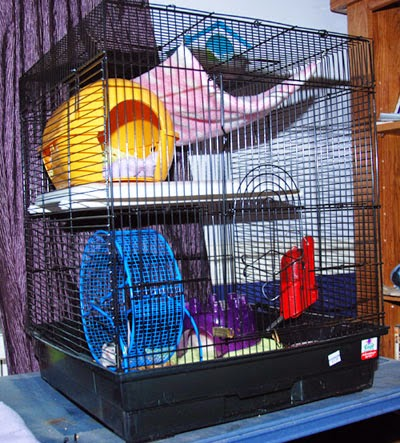 New Mouse House