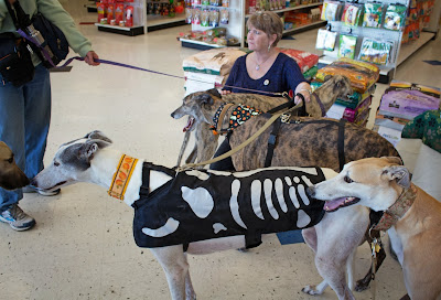Greyhounds Begin a Macrame Project