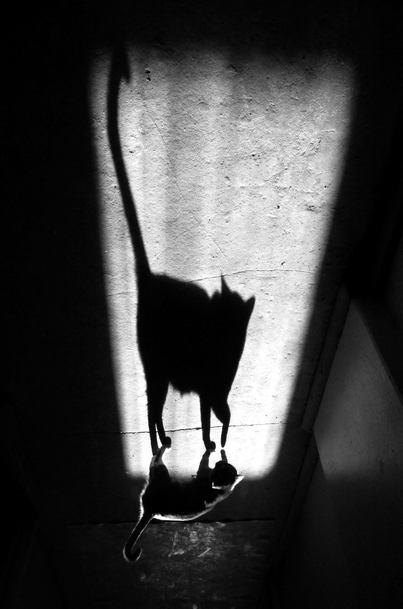 ©Alexey Menschikov. Shadow Photography