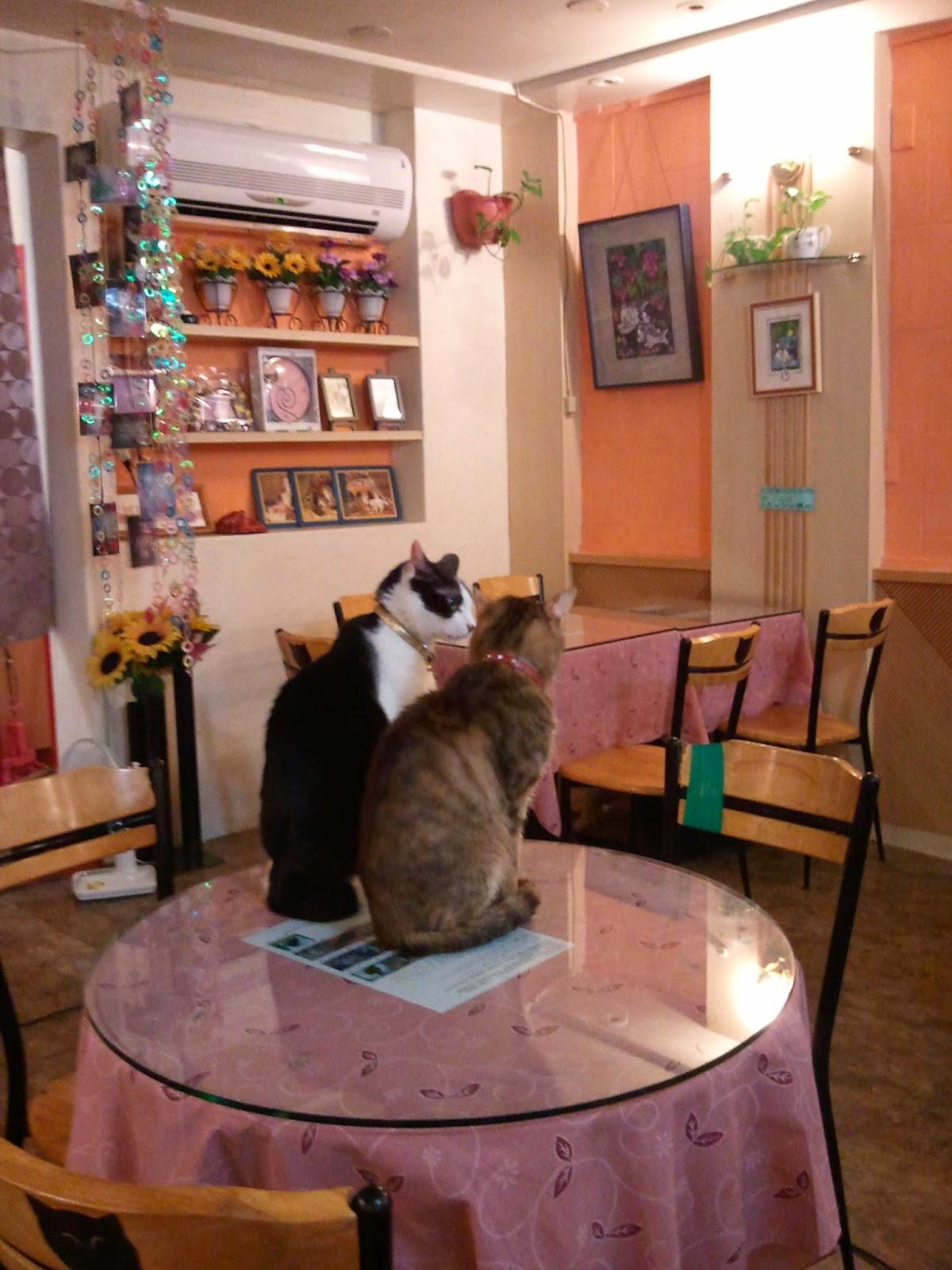 台湾猫カフェの写真