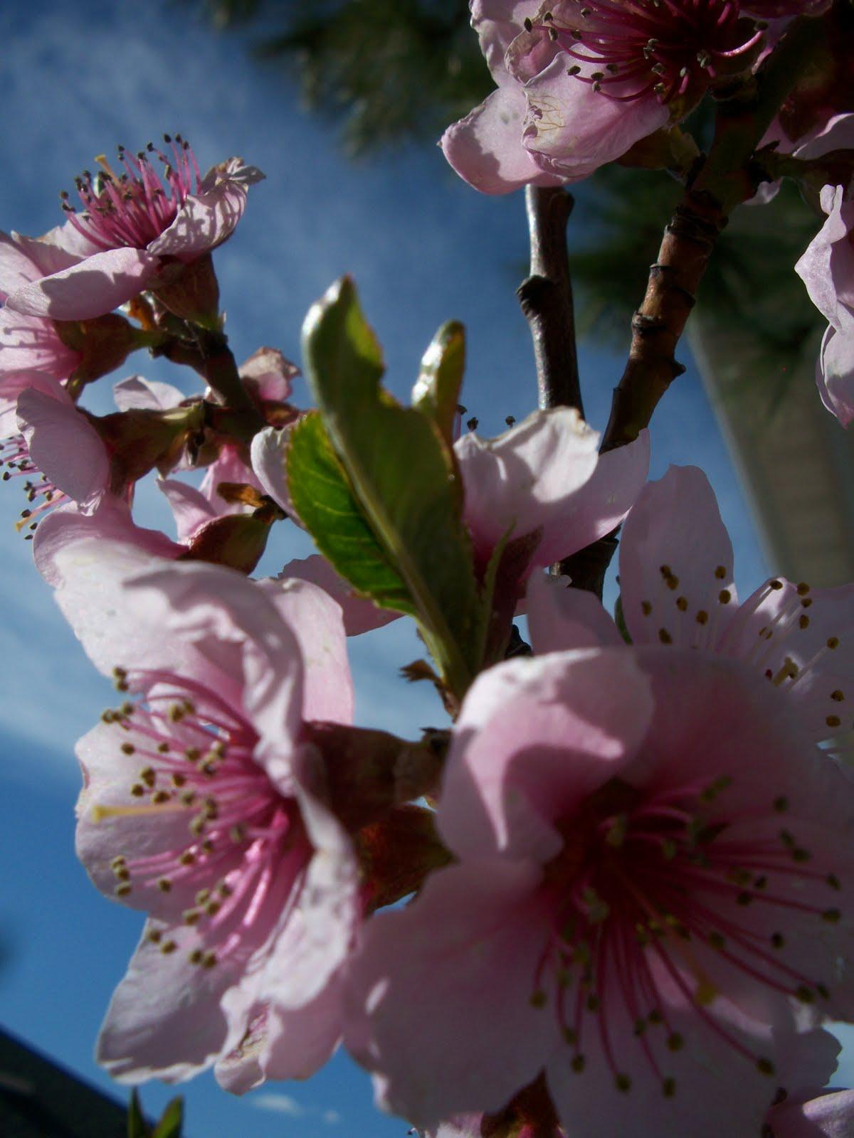 simple and savy spring fhe idea