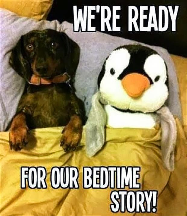 funny animal caption, animal pictures with captions