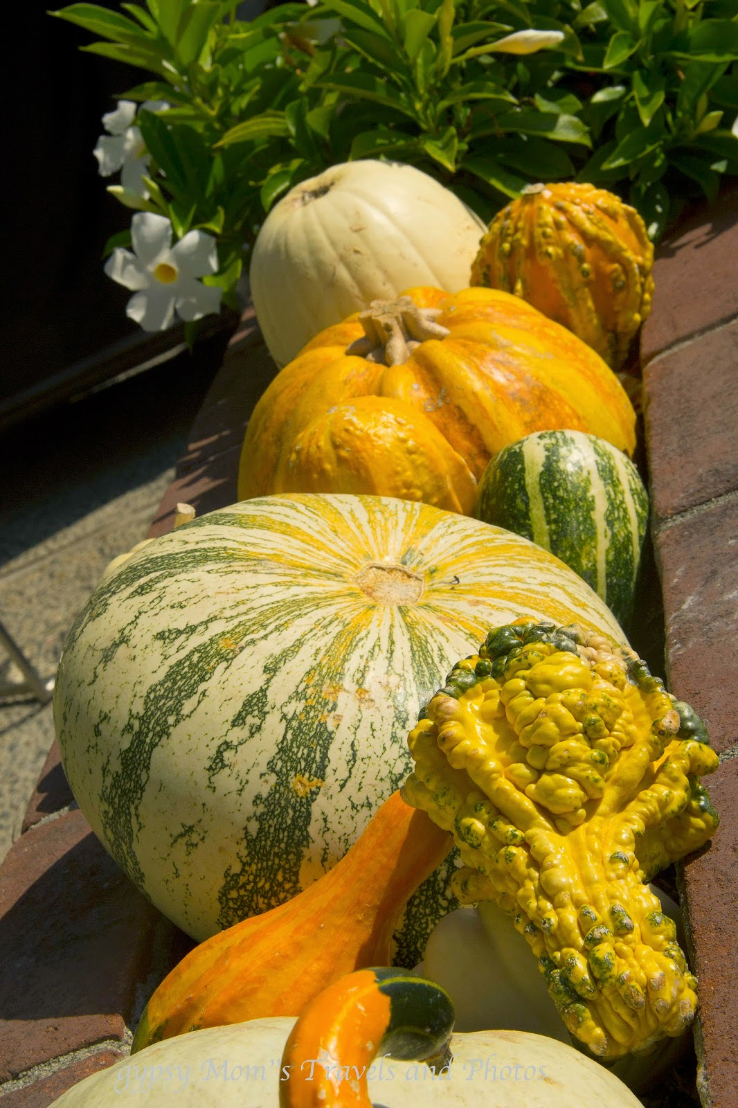 Pumpkins and gourd in front of house on Balboa Island