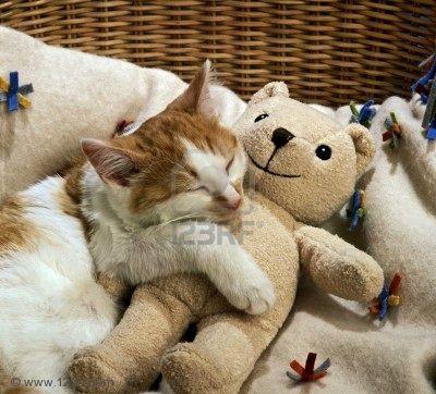 Selamatkan Kucing Malaysia Kucing Suka Teddy Bear 2