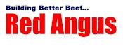 Junior Red Angus