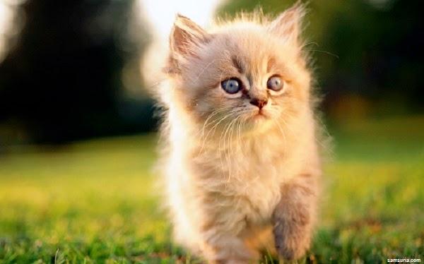 Une jolie photo chat mignon