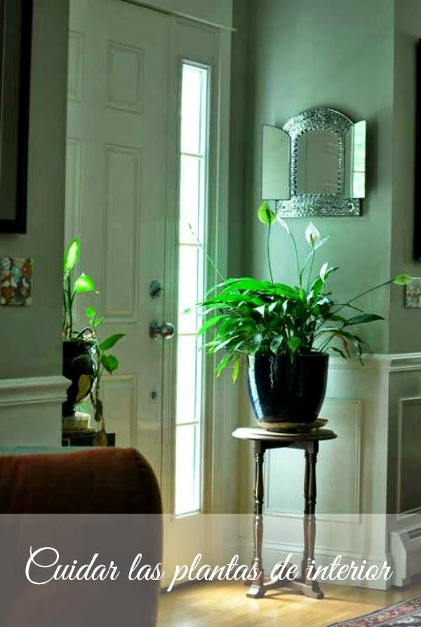 Claves para el cuidado de las plantas de interior guia de jardin - Plantas de interior cuidados ...