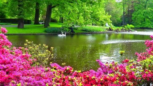 Blog recanto da natureza uol blog for Garden pond quotes