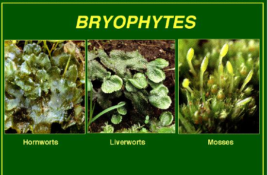bryophyte and pteropyte life cycles Advanced search options text type matching type select levels select subjects full text titles only.