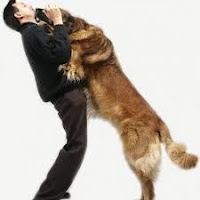 Tips And Techniques For Successful Dog Training