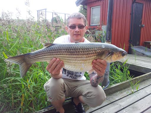 Svenskt rekord Tjockläppad Multe 6,596 Kg 120819
