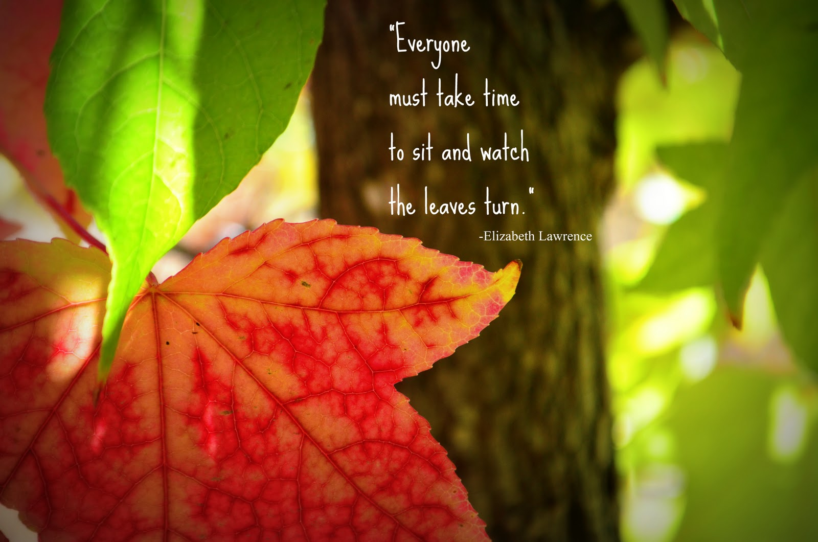 RED LEAVES Quotes Like Success
