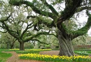Nice Brookgreen Gardens