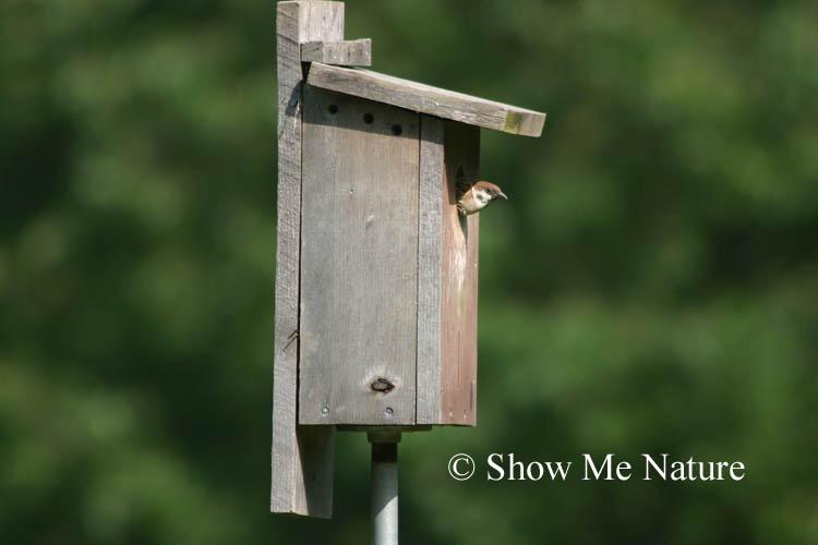 tree sparrow nest box 1