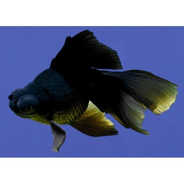 Mascotapetit mi primer acuario for Enfermedades de peces de agua fria