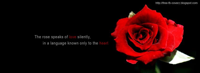 dark red rose facebook cover