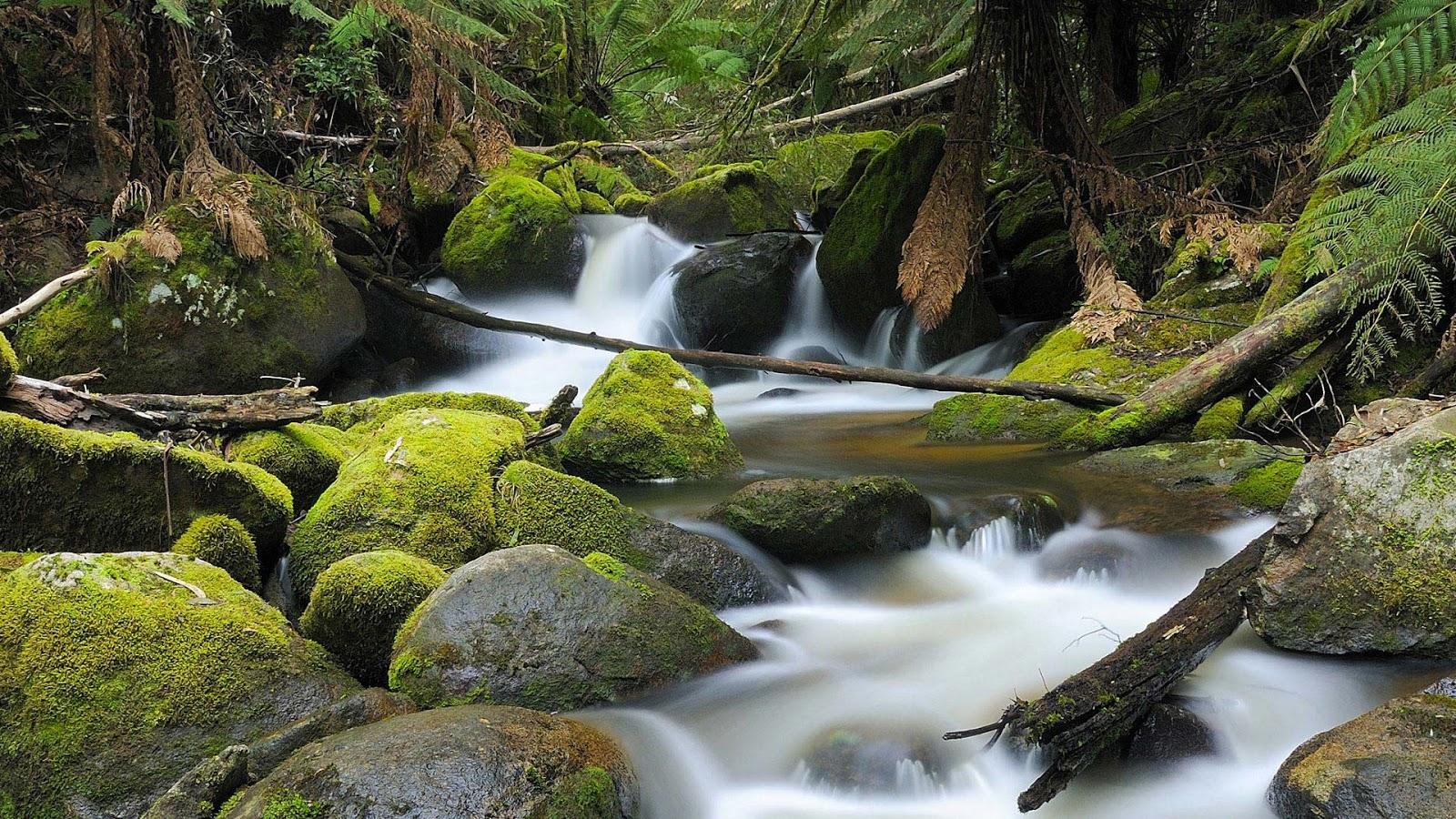 free beautiful nature green - photo #4