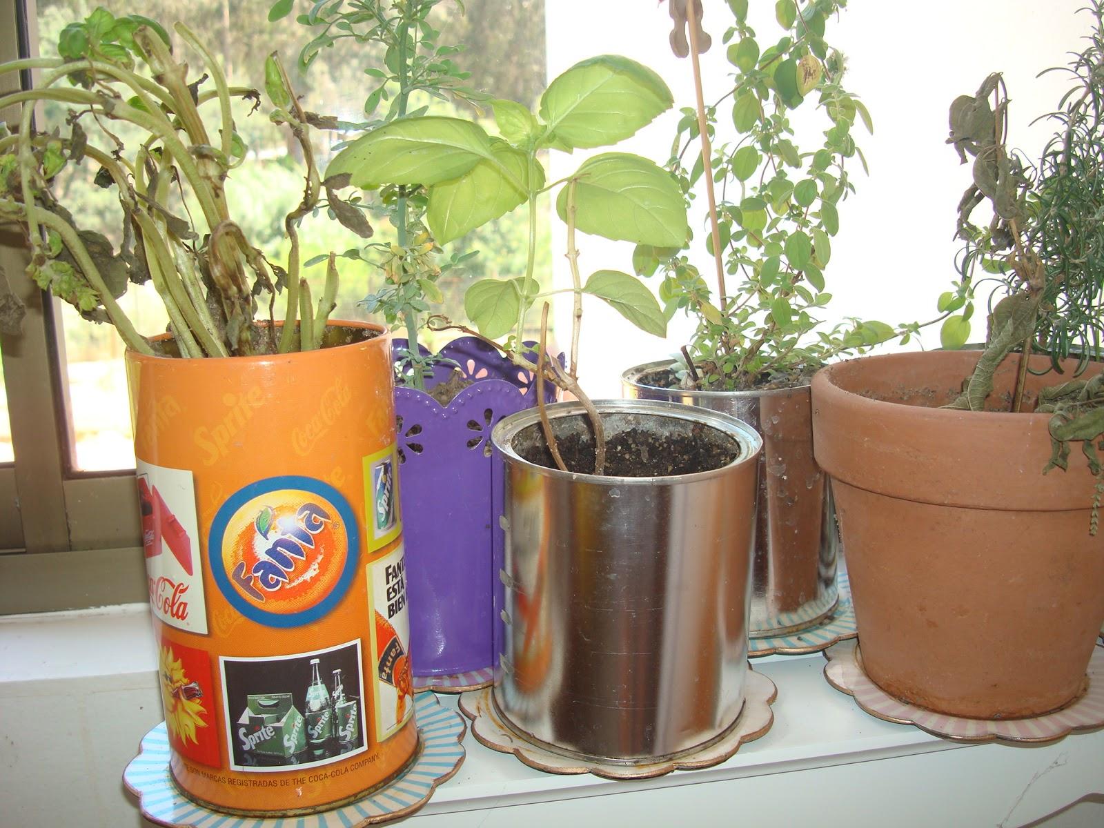 La casa de la laguna plantas arom ticas para la cocina - Plantas aromaticas en la cocina ...