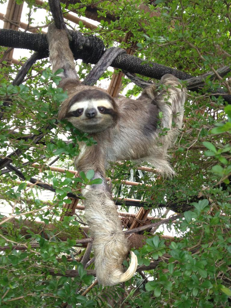 sloth pose for camera, funny animal pictures of the week