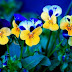 Best Yellow Flowers for Your Garden